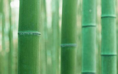 竹について